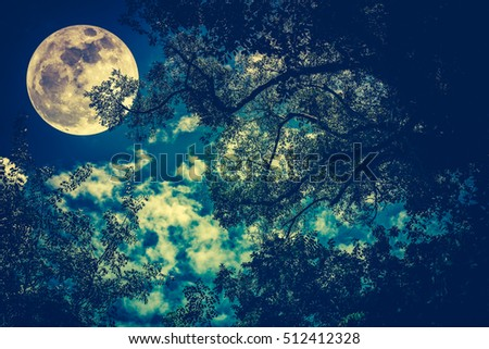 Silhouette of the branches of trees against night sky with full moon. Beautiful landscape with bright moon. Outdoors. Cross process and vintage tone effect. The moon were NOT furnished by NASA.