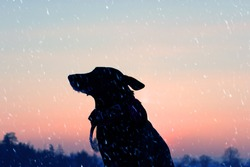 Silhouette of the dog on the street. sad and lonely dog