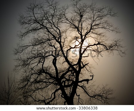 silhouette of the old tree with the nest against a sun and a sky background
