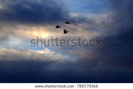 Silhouette of three birds flying towards the setting sun #788170366