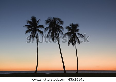 Silhouette of three palm trees on the beach