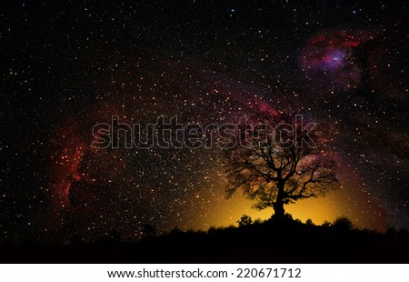 silhouette of tree against stars