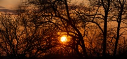 Silhouette of tree branches against the setting sun. Beatiful sunset in the wood. Nature wallpaper.