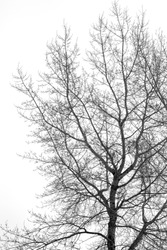 silhouette of tree branches on white background