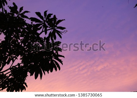Silhouette of trees and purplish twilight sky. This picture is suitable for wallpaper or background.