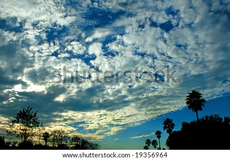 Silhouette of trees at Sunset, brilliant clouds.