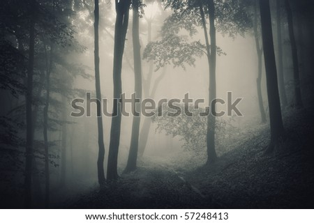 silhouette of trees in a forest with fog #57248413
