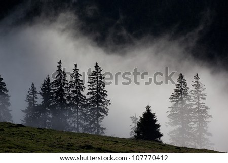 Silhouette of trees in mist