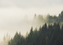 Silhouette of trees in morning fog on mountain