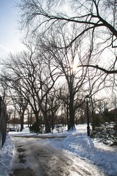 Silhouette of trees with snow and wet road at park