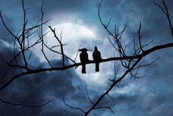 Silhouette of two birds on a branch in a night scene with a moonlit background in a cloud.