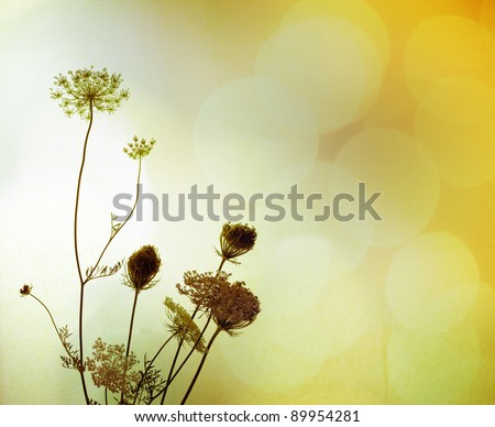Silhouette of wild flowers against blurry background full of light, with a faint texture.  Plant's name is bird's nest, or Bishop's Lace (UK), Queen Anne's Lace in the USA. Latin: daucus carota.
