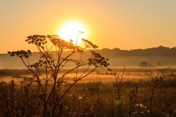 Silhouette of wildflower against rising sun. Beautiful sunrise over a meadow with wildflowers at summer