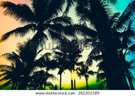 silhouette palm tree - vintage effect filter and light leak filter effect