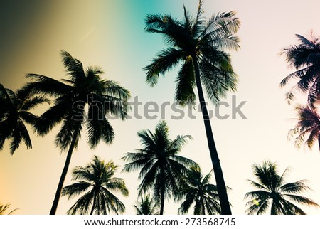 Silhouette palm tree - vintage filter and light leak effect