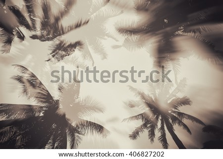 silhouette palm tree with...