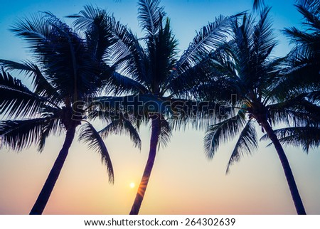 Silhouette palm tree with sun light - vintage filter and light leak effect processing style