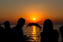 silhouette people taking seagull photo with sunset at Bang Pu Resort, Thailand. decoration image contain certain grain  noise and soft focus.