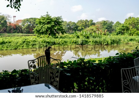 silhouette picture of dove bird next to Kok river in Chiang rai with green back ground