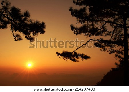 Silhouette Pine tree on sunset time