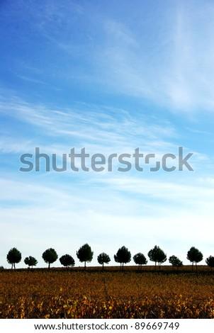 Silhouette row of pines tree
