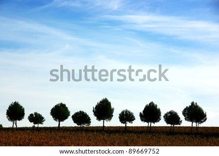 Silhouette row of pines tree