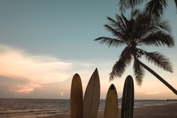Silhouette surfboard on tropical beach at sunset in summer. Seascape of summer beach and palm tree at sunset. Vintage color tone