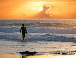 SILHOUETTE: Surfer walking into the water holding surfboard to catch the last waves before the sun sets. Sportsman going surfing at stunning golden sunset. Colorful sky at sundown over Fuerteventura.