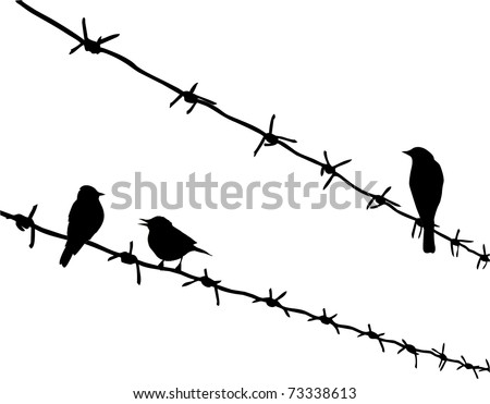 silhouette three birds on barbed wire