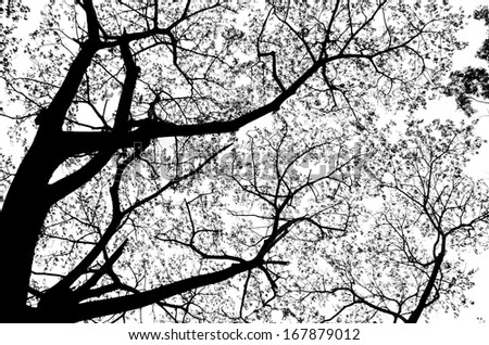 Silhouette tree in black and white #167879012