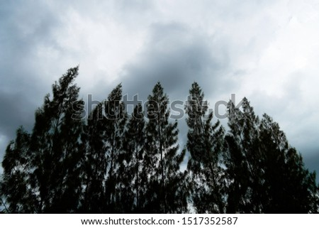 silhouette trees and gloomy sky #1517352587