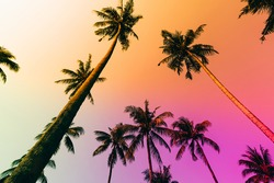 Silhouette tropical palm tree with sun light on sunset sky. Summer vacation and nature travel adventure concept. Coconut palm trees against colorful sunset
