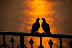 Silhouette Two pigeons Stand on the terrace by the river