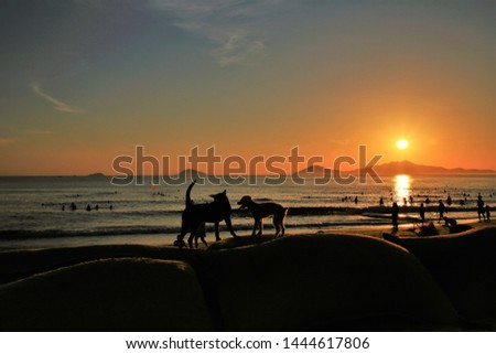 Silhouette Two puppies are playing fun on the beach, where people come to exercise in the morning, relaxed and happy,relax dog,relax concrept, #1444617806