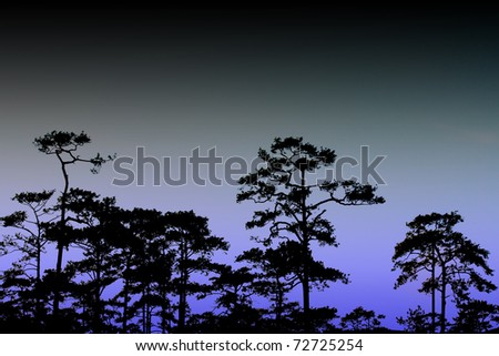 Silhouette view of beautiful Image at Phukradung Loei Thailand