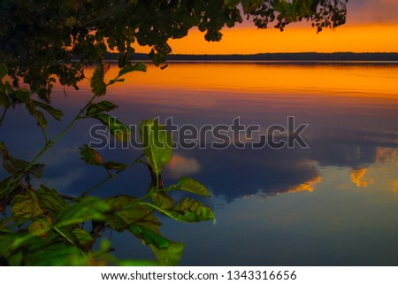 Silhouetted foliage and illuminated foliage at yellow sunset and reflected blue clouds. #1343316656