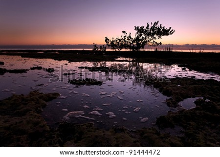 Silhouetted Mangrove Tree in South Florida Sunrise