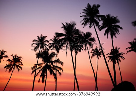 Silhouetted of coconut tree during sunrise - Shutterstock ID 376949992
