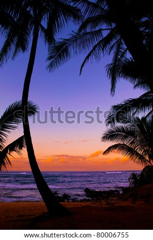 Silhouetted palm trees at a tropical beach sunset