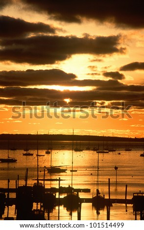 Silhouetted sailboats in harbor at sunset, Mt. Desert Island, Maine
