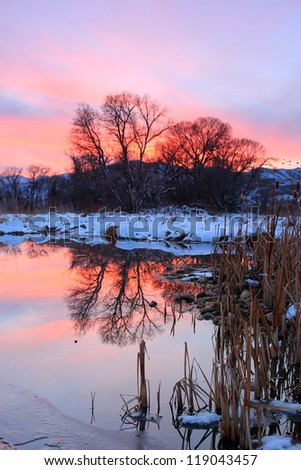 Silhouetted trees reflecting in a pond with dusk sky, Utah, USA.