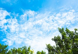 Silhouettes nice blue sky with tree