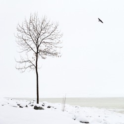 silhouettes of a lonely tree and a lonely bird on the background of white snow and white sky on the gulf of finland