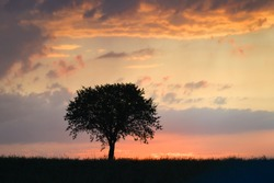Silhouettes of a man and a tree in the open meadow during sunset