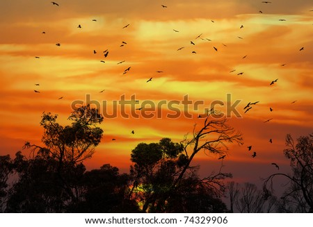 Silhouettes of birds and trees on the orange sunset background
