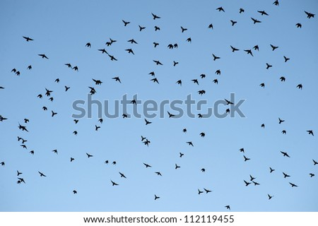 Silhouettes of birds flying against blue sky