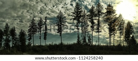 Silhouettes of coniferous trees(predominantly firs) on a horizon, clouds, sun, sky. Scenic landscape, forest. Relaxing nature. High resolution panoramic photo.Creative post processing. Central europe.