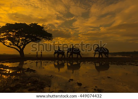 Silhouettes of elephants under the tree at sunrise. #449074432