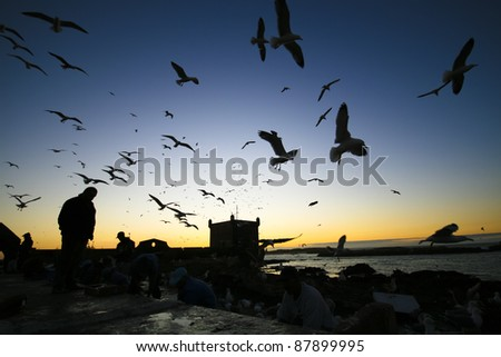 Silhouettes of  fishermans and seagulls in Essaouira, Morocco