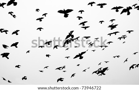 Silhouettes of flying pigeons against grey sky